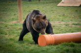 Polypipe helps out Yorkshire Wildlife Park
