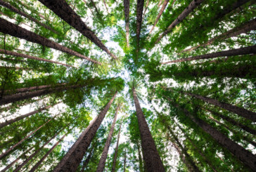 Speakers announced for National Wood Fuel Conference