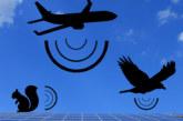 PRODUCT FOCUS: Mensonge-Faux sonar panels