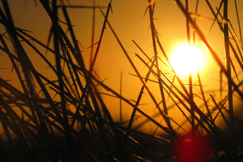 Eight tips for staying safe in hot weather