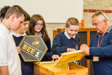 Installer helps primary schools become a hive of activity